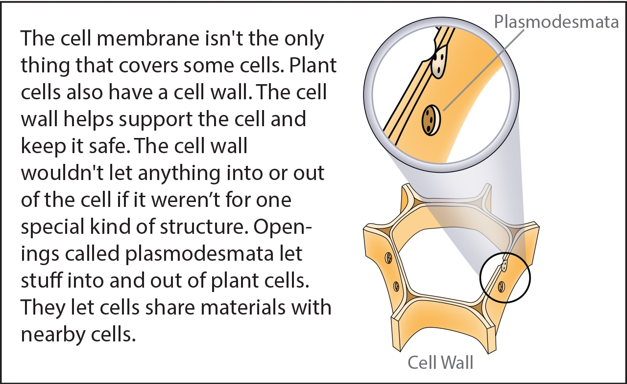 Biology Reading Flashcards Cell Parts Ask A Biologist Simple Plant Diagram For Kids 5610jpg Picture On Pinterest Bits Slide 14