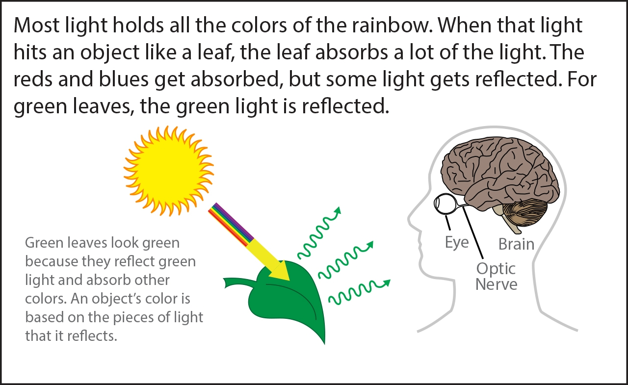 Seeing Color Bits | Ask A Biologist