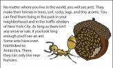 A close-up illustration of an acorn ant, with a colony in an acorn in the background.