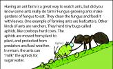 An illustration of an ant getting sugary waste water from an aphid.