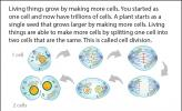 Illustration of cell division