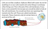 Illustration of a microscopic view of a cell membrane.