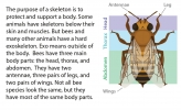 An illustration of different bee body sections.
