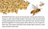 An illustration of a bee colony and bees flying