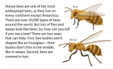 An illustration showing a bee versus a wasp