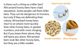 An illustration pointing out key different traits found in Africanized bees.