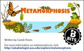 Metamorphosis color illustration, showing a butterfly and a frog metamorphosing.