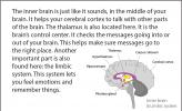 Illustration of the inner (or middle) brain.
