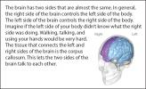 Illustration showing the two sides of the human brain.
