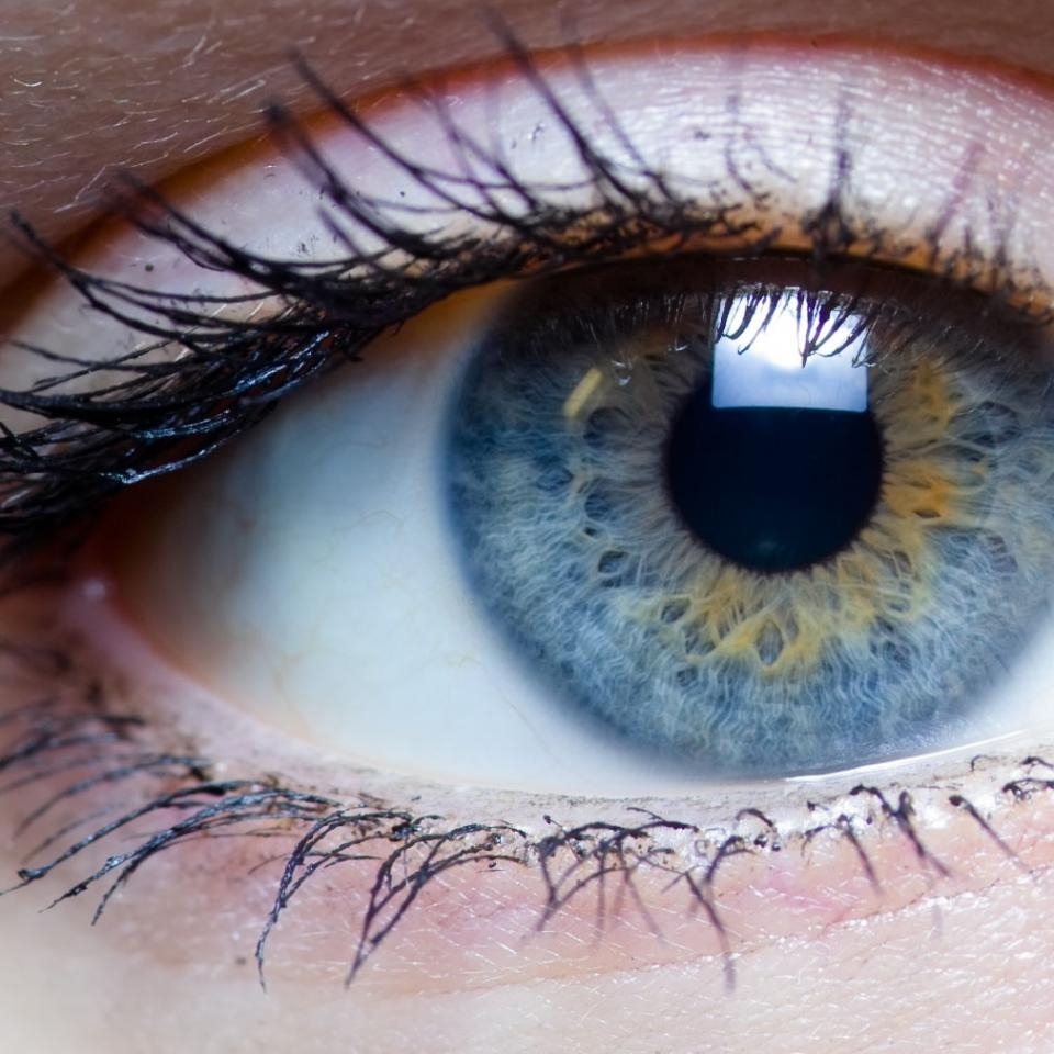 Close up of a human eye, colored blue