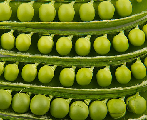 Peas in pods