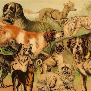Painting of dog breeds