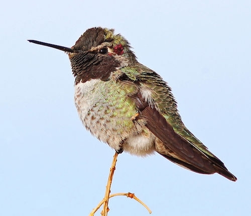 Animales del Desierto | Ask A Biologist