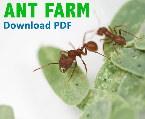Ant farm PDF