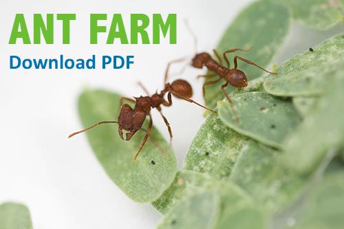Build an Ant Farm