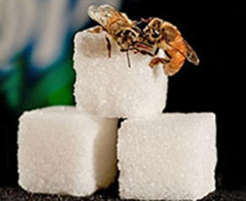 Two bees on sugar cubes