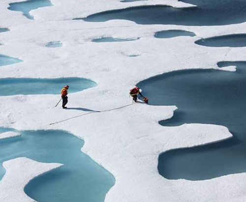 Biologistes sur la fonte des glaces dans l'Arctique