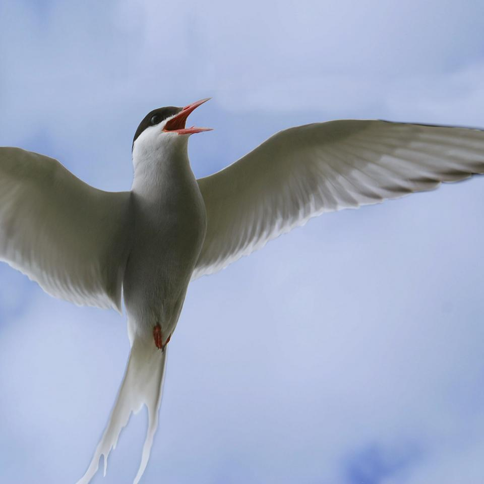 bird in flight image