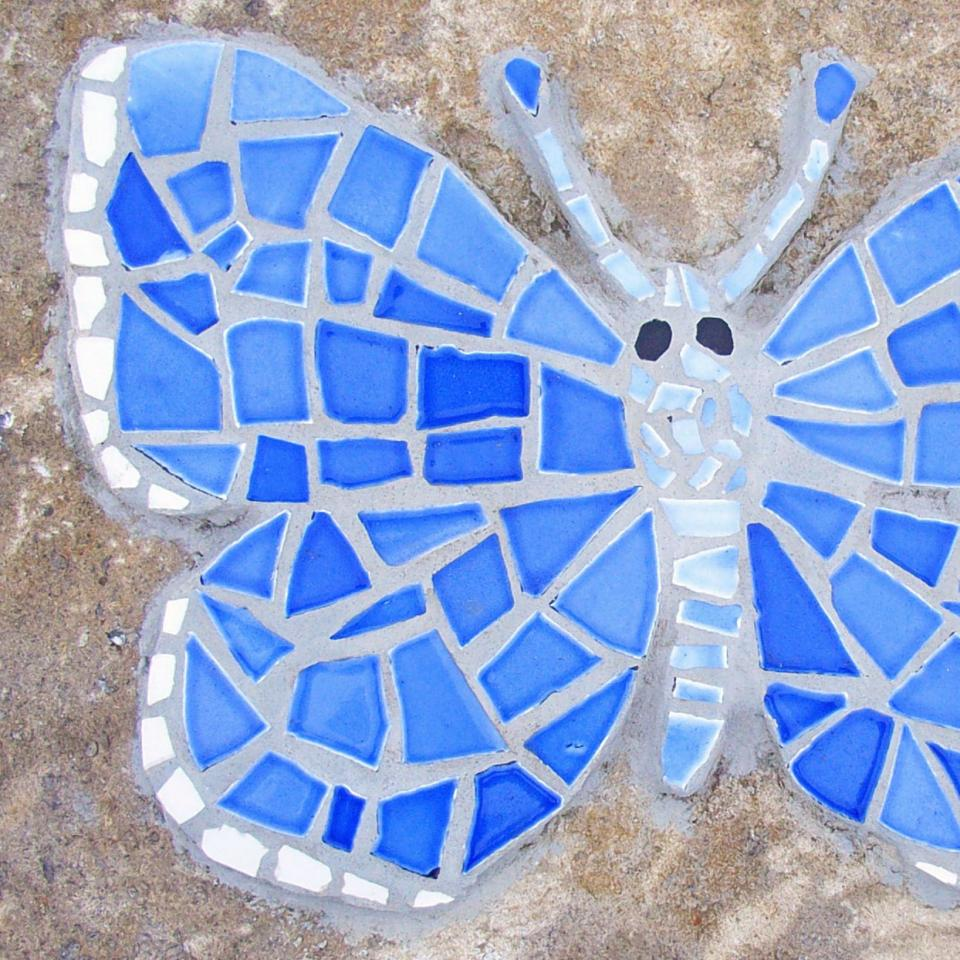 Mystery butterfly ask a biologist learn more about these colorful flying insects in their companion story buycottarizona