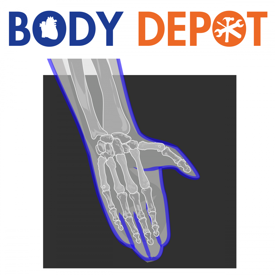 Try your hand at locating and identifying the bones in our virtual skeleton. e145e42a527