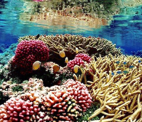 Palmyra Atoll Reef