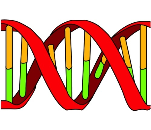 Icon of DNA showing double helix and nuleotide bases