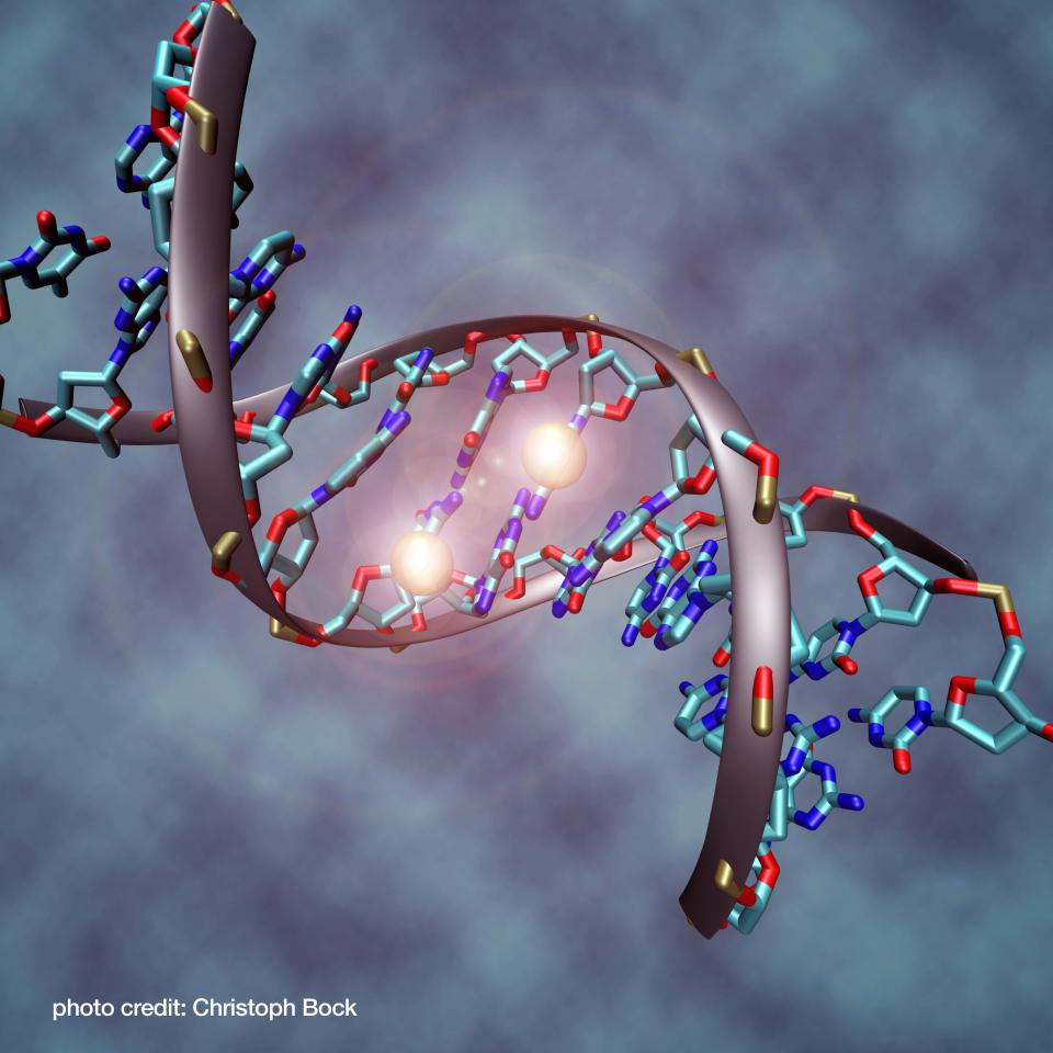 DNA methylation illustration