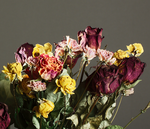 dry roses in a vase