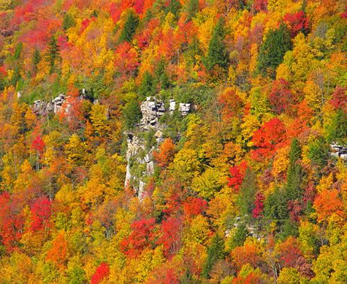 A forest with changing colors of autumn
