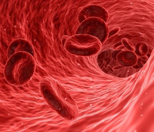 flujo sangre