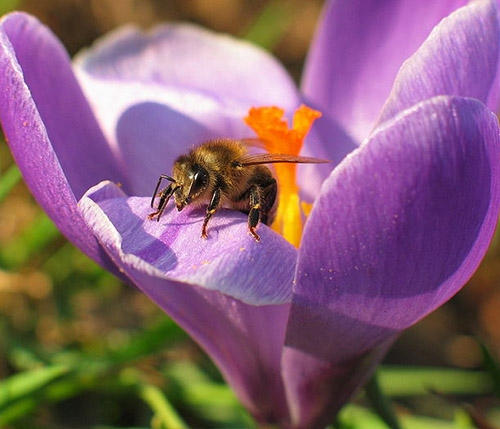 Honey bee on flower, image links to Top Questions page