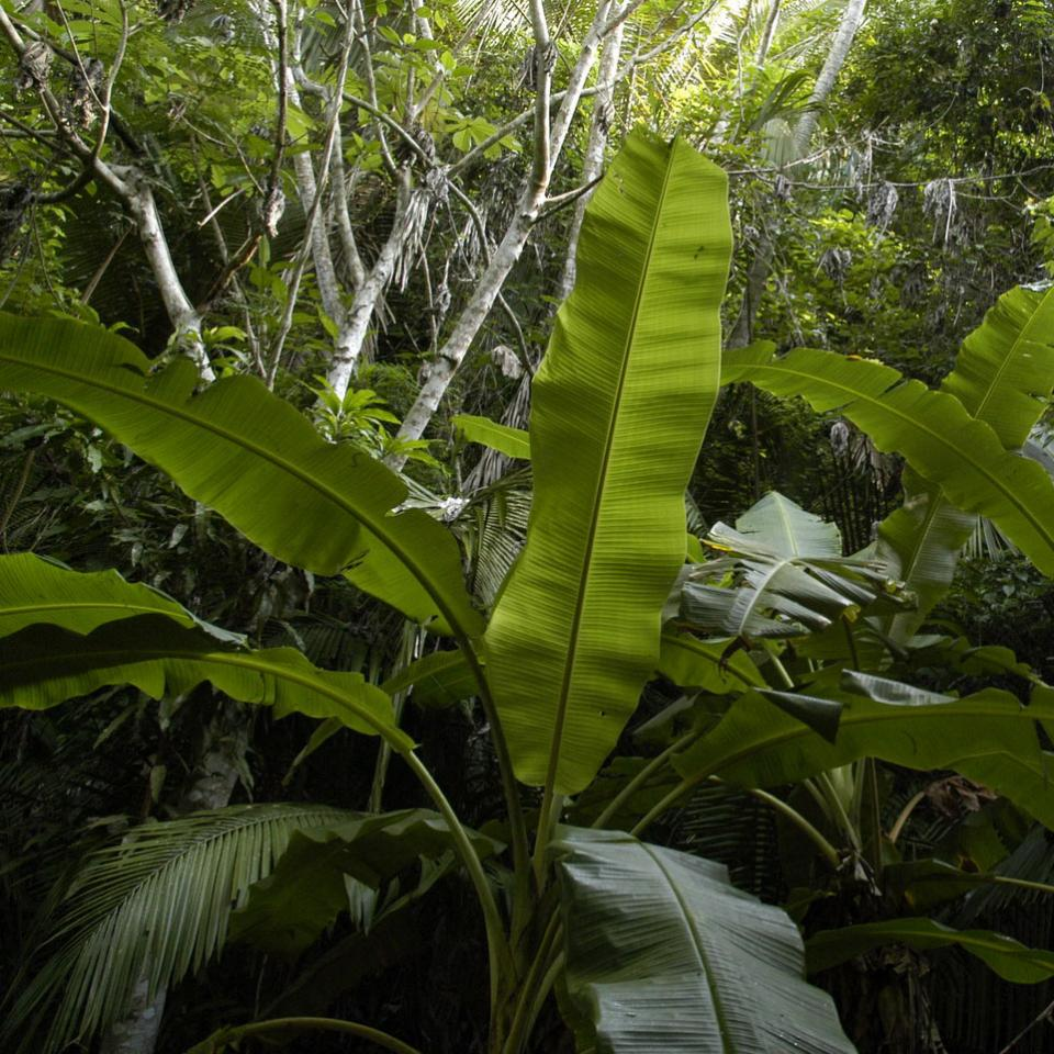 Rainforest plants, image links to Top Questions page