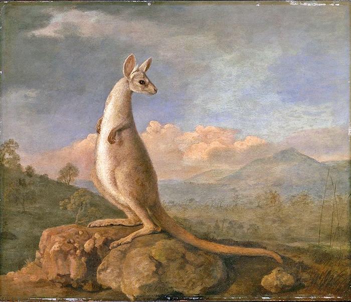 George Stubbs painting kangaroo