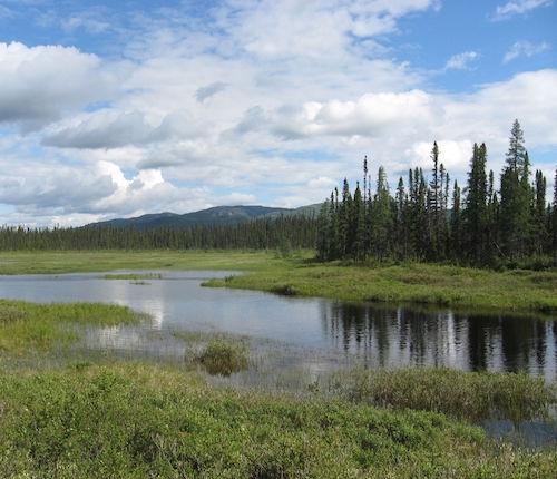 Lagoa da floresta boreal