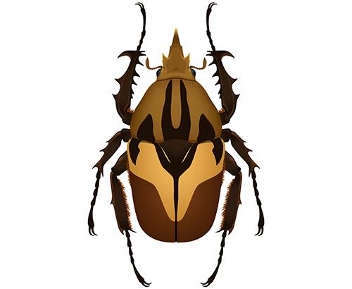 Insect Anatomy And Physiology Ask A Biologist