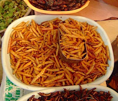 Street insect food in Thailand