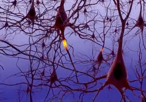 Neural signaling