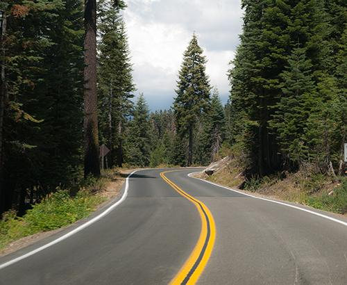 A road surrounded by trees