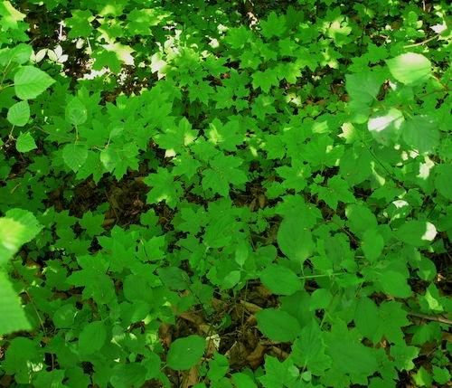 Seedlings on the forest floor