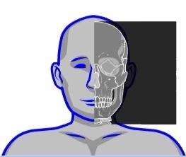 Skeleton viewer
