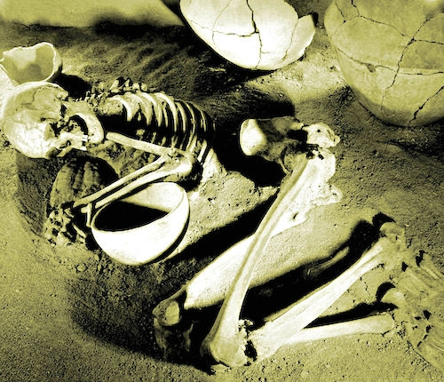 excavated skeleton