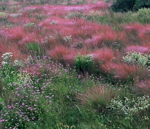 subtropical grassland