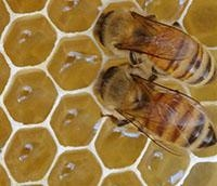 Trabajo abejas