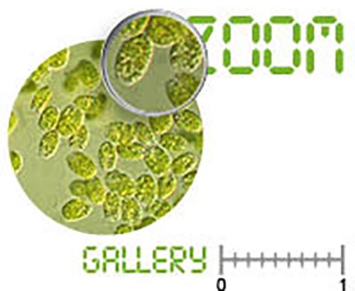 Plancton imagenes