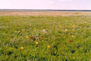 An open field with flowers